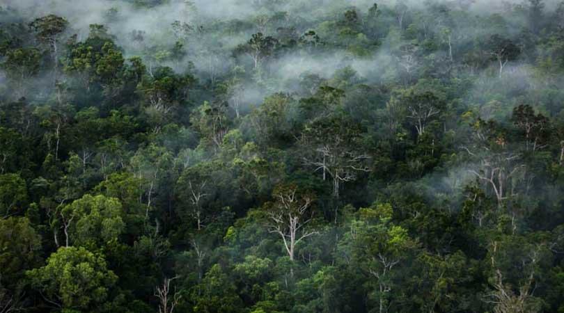 Menimba Ilmu Pentingnya Melindungi Hutan demi Stop Perubahan Iklim Lewat Acara Eco Squad Blogger Gathering