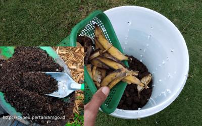 Stop Buang Sampah Sisa Sayuran dan Makanan dengan Mengubahnya jadi Pupuk Kompos Tanpa Bau ! Begini Caranya