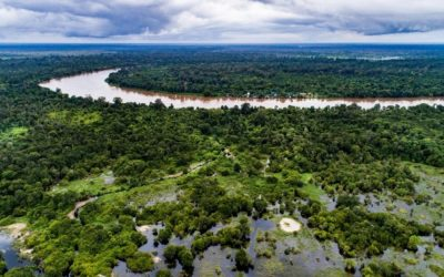 Lindungi Lahan Gambut, Lindungi Fauna Indonesia